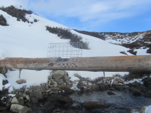 Stoat trap, Dalnaspidal (close to the National Park Boundary)