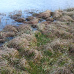 Loch shore line prone to flooding.