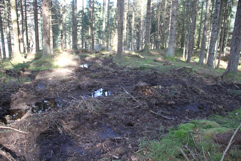 The start of what promises to be a disruptive forestry operation